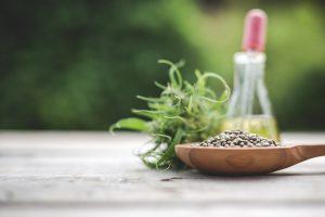 best cannabis breeders seeds